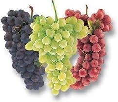 2015-05 Onbekende Italiaanse Druiven FI