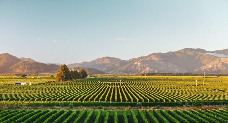 16-10-2021 : Nieuw-Zeeland Sauvignon Blanc
