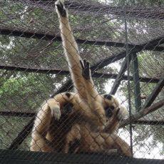 Hanoi zoo in Thu Le Park