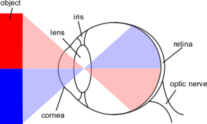 Visual system  wikidoc
