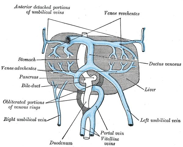 Liver Umbilical Vein Line