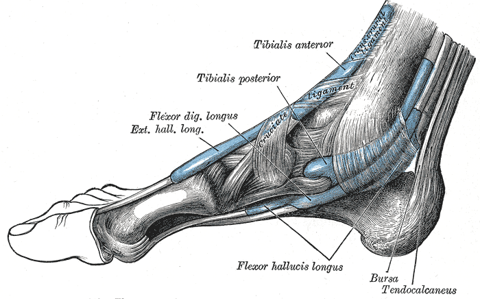 Lump Above Arch Foot