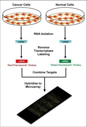 DNA microarray  wikidoc