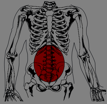 image of lumbar region site of chronic low back pain