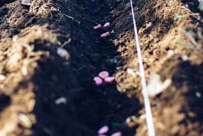 WIKI HOSTEL FAMILY pantasema autumn seeds line