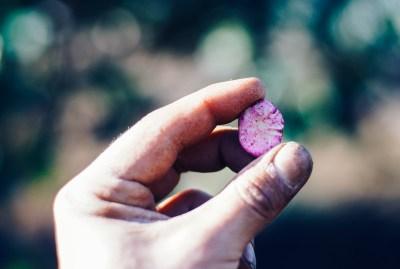 WIKI HOSTEL FAMILY pantasema hand seed