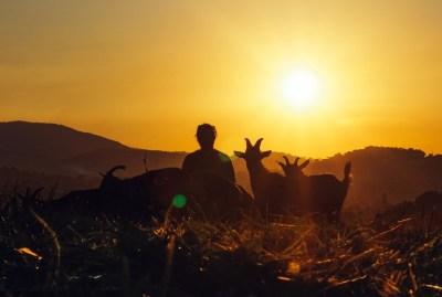 WIKI HOSTEL FAMILY pantasema sunset coats
