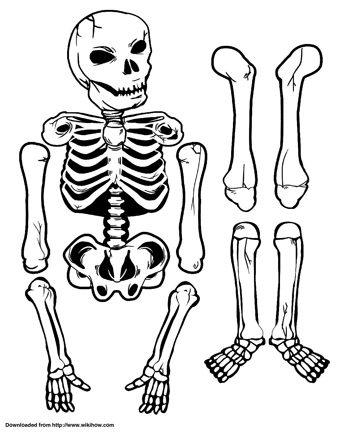 Printable Skeleton