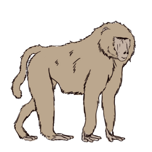 Image result for cartoon of a baboon