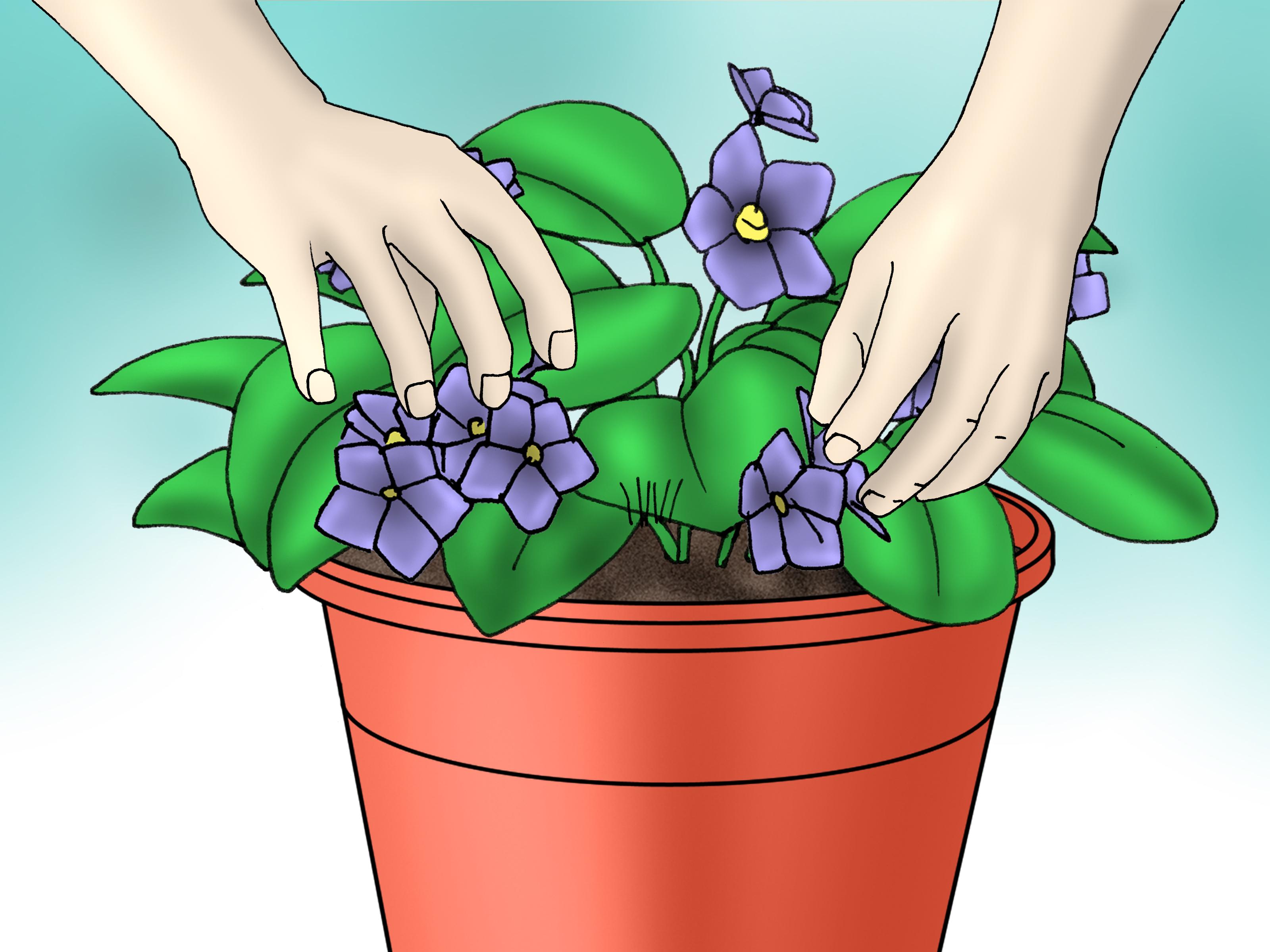 Best Plants Hanging Indoors