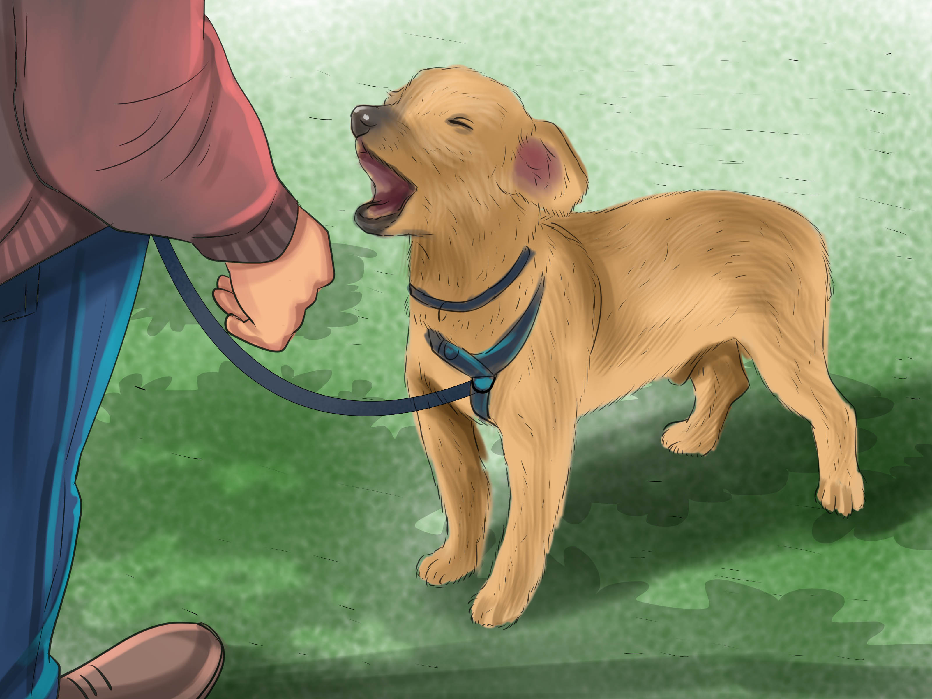 3 Ways To Teach A Dog To Tell You When He Wants To Go Outside