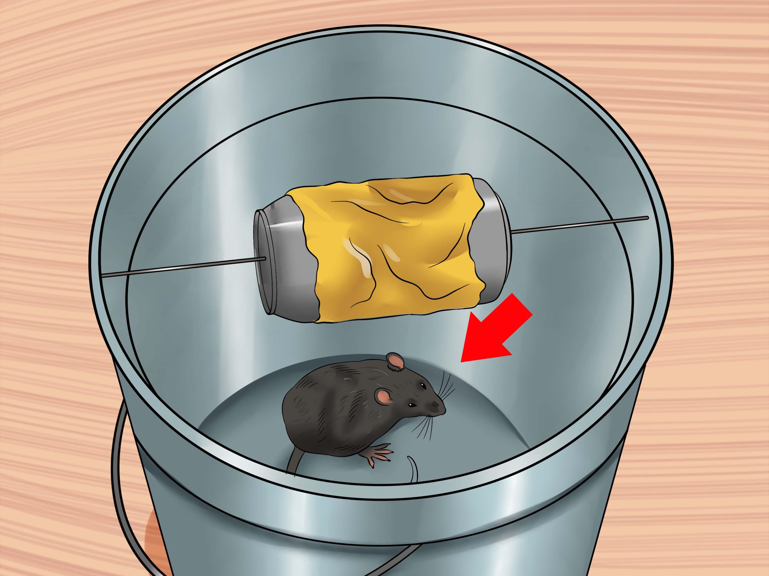3 Manieres De Attraper Un Rat Domestique Qui S Est Echappe