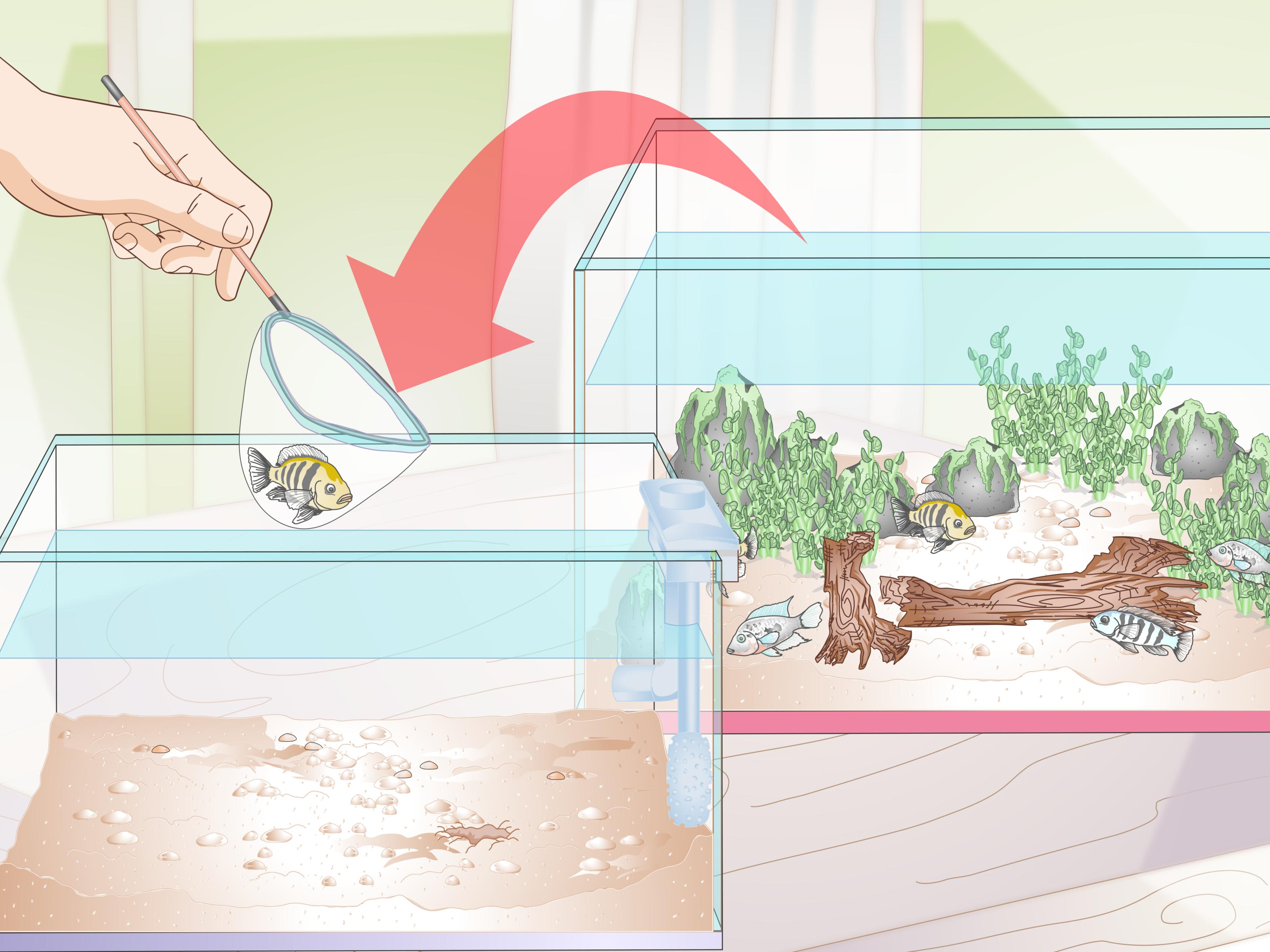 How To Buy Fish For An Aggressive Freshwater Aquarium 11