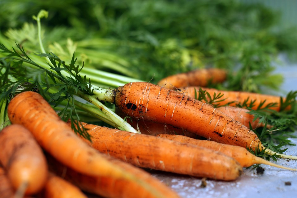 How to Harvest Carrots: 4 Steps (with Pictures) - wikiHow