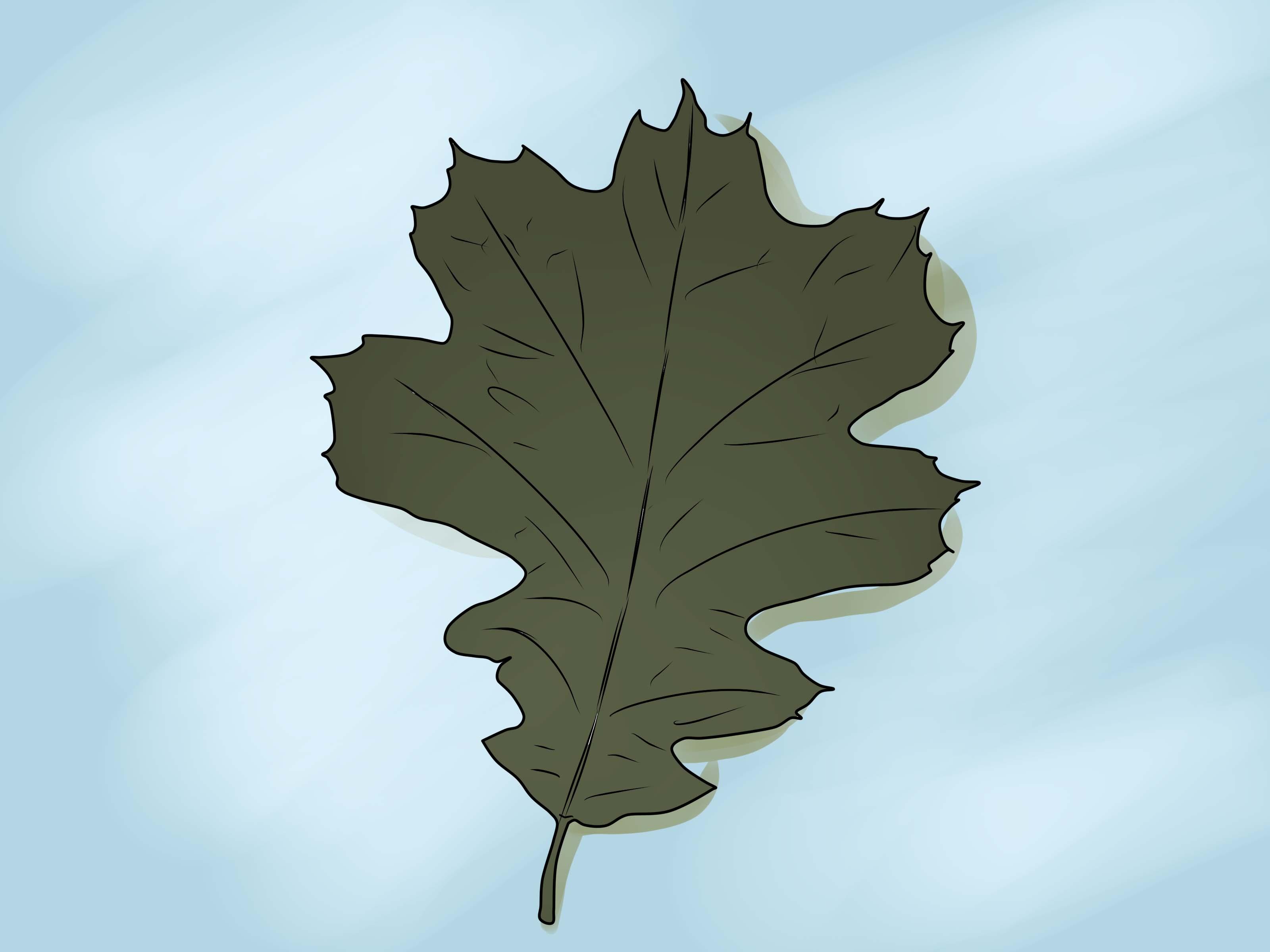 comment identifier les feuilles de