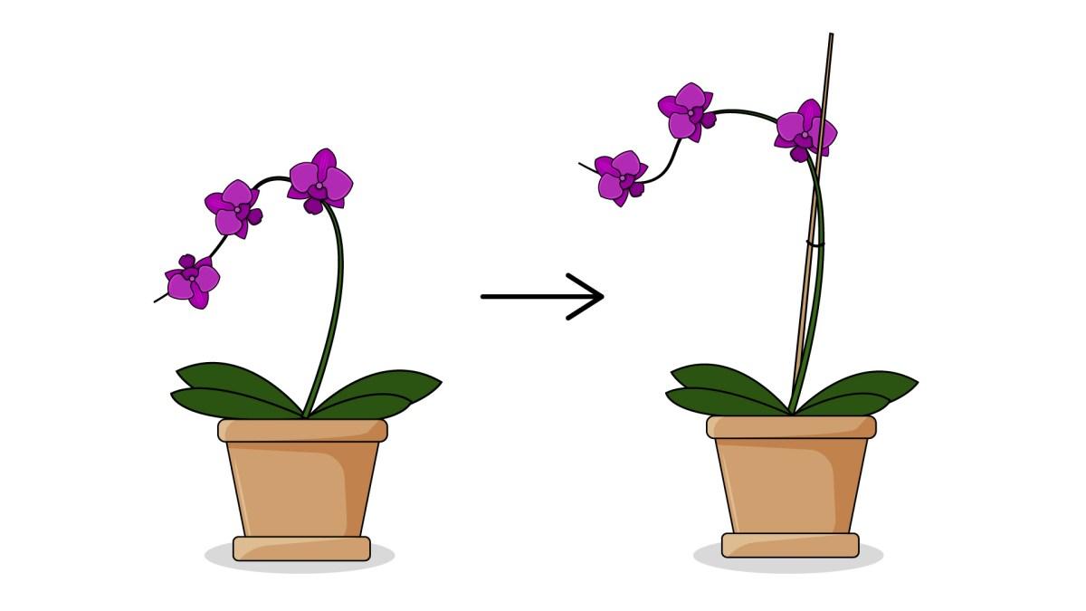 Plant Flowers Step 12 Version 3