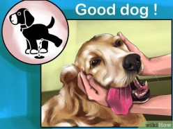Cartoon illustration of dog getting praised for going potty in the correct area.