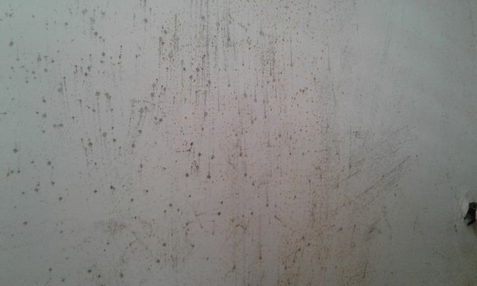 Ceiling Mould