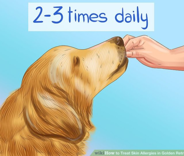 Image Titled Treat Skin Allergies In Golden Retrievers Step