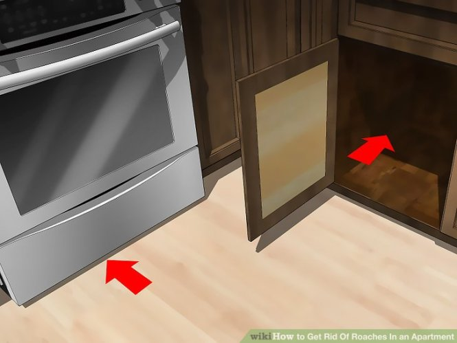 Image Led Get Rid Of Roaches In An Apartment Step 3