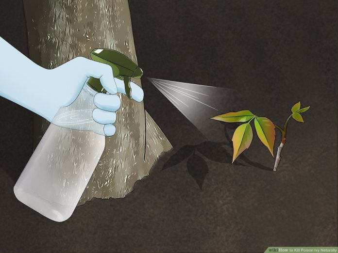 5 Ways To Kill Poison Ivy Naturally Wikihow
