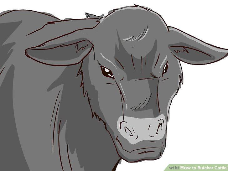 How To Butcher Cattle With Pictures Wikihow