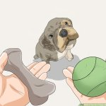 3 Ways To Care For A Puppy When You Work Full Time Wikihow Pet