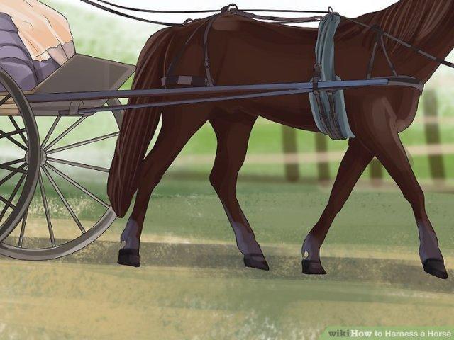 Harness a Horse Step 14 Version 4.jpg