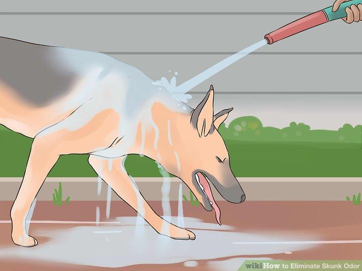 Eliminate Skunk Odor Step 11.jpg