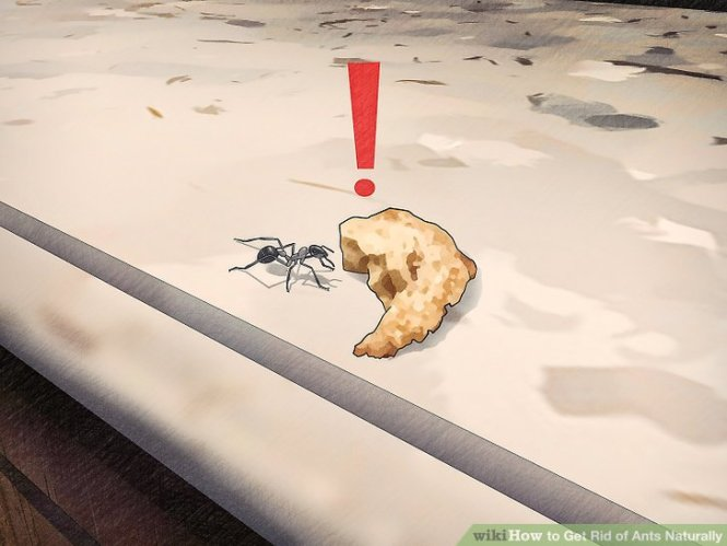 30 Natural Home Remedies To Get Rid Of Ants From Garden Balcony Web
