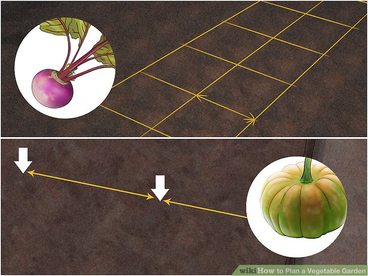 Plan a Vegetable Garden Step 16.jpg