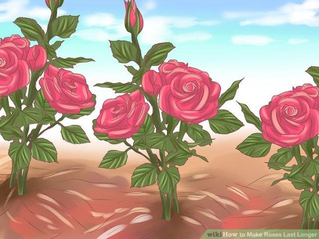 Make Roses Last Longer Step 9.jpg