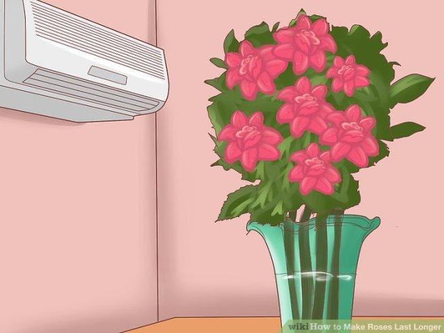 Make Roses Last Longer Step 4.jpg