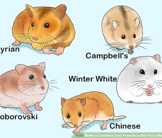 Image Titled Convince Your Parents To Get You A Hamster Step