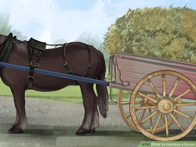Harness a Horse Step 11 Version 4.jpg