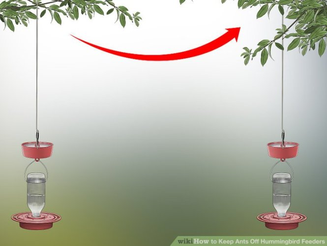 How Do I Keep The Squirrels In My Yard Away From Feeders And Bird Seed All About Birds