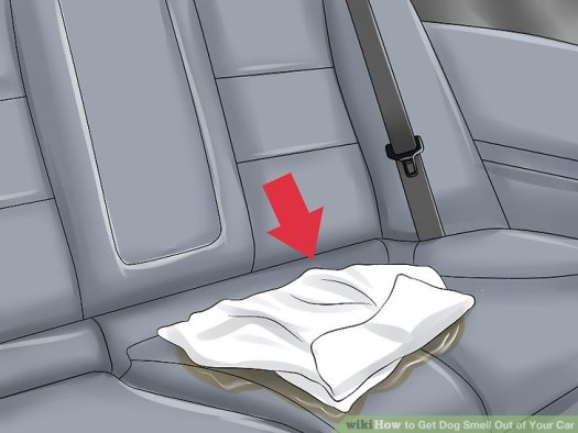 How To Get Bad Smell Out Of Carpet In Car   Lets See ...