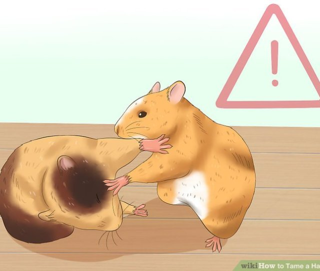 Image Titled Tame A Hamster Step