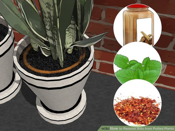 6 Mosquito Repellent Plants To Keep Pests Away