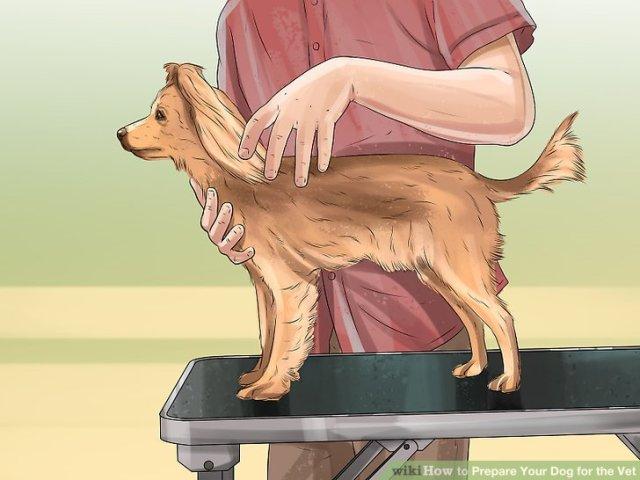 Prepare Your Dog for the Vet Step 4 Version 2.jpg