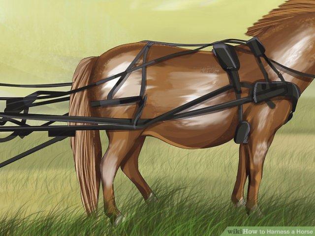 Harness a Horse Step 3 Version 5.jpg