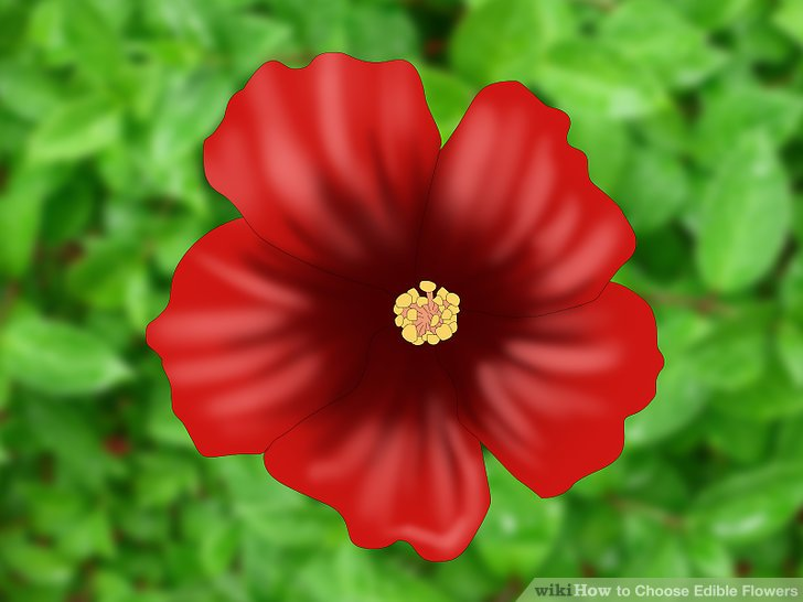 Image Result For What Hibiscus Flowers Can You Use To Make Tea