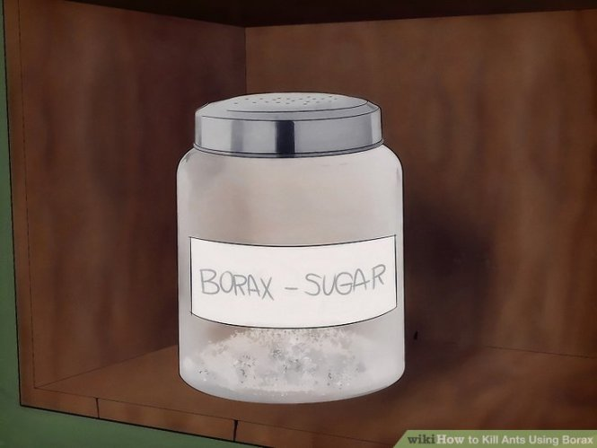 How To Get Rid Of Ants Kill The Whole Colony With Borax And Sugar