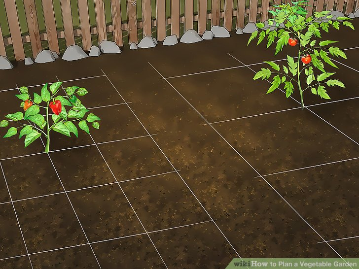Plan a Vegetable Garden Step 7.jpg