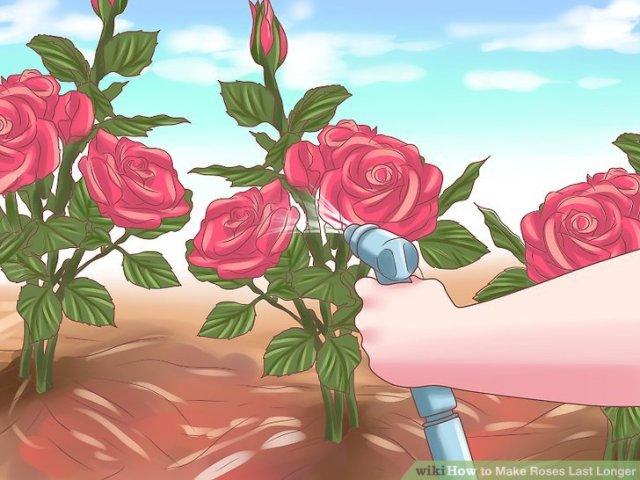 Make Roses Last Longer Step 12.jpg