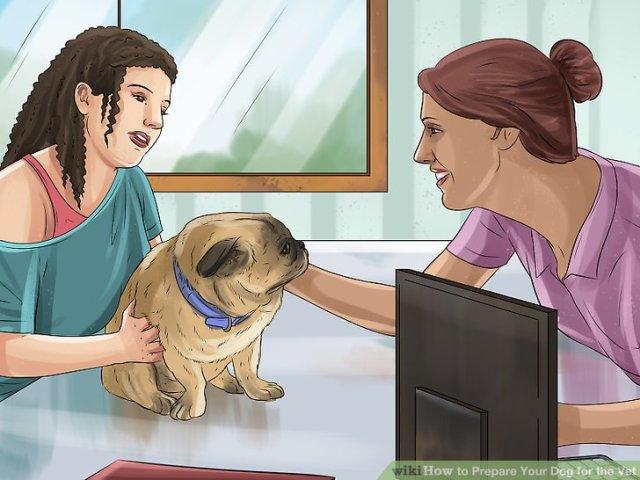 Prepare Your Dog for the Vet Step 6 Version 2.jpg