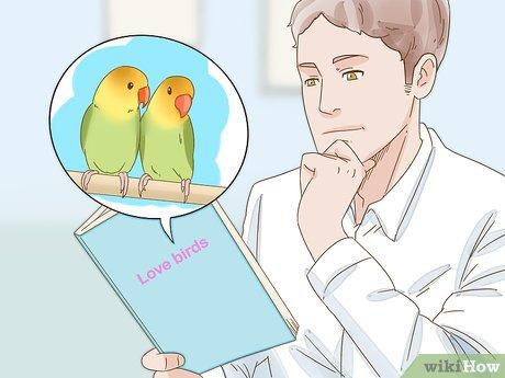 كيفية تزويج طيور الحب 13 خطوة صور توضيحية Wikihow