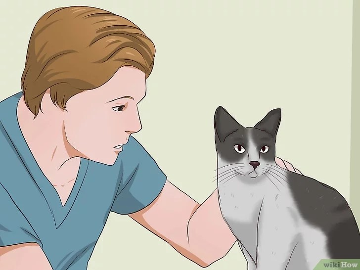 Immagine titolata Remove Cat Urine Smell Step 16