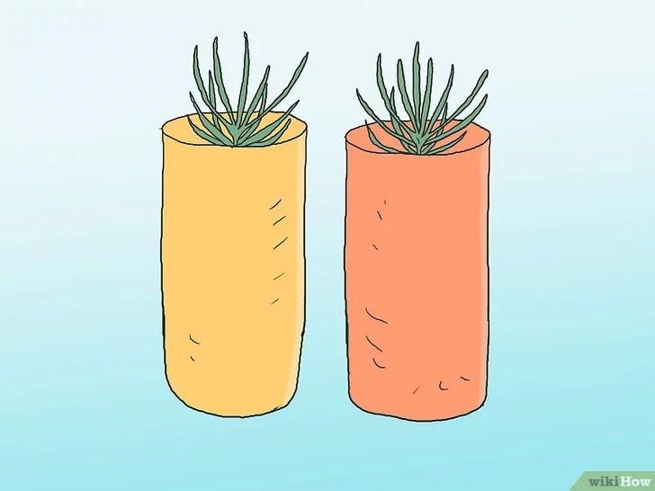 Imagen titulada Grow Pine Trees Step 24