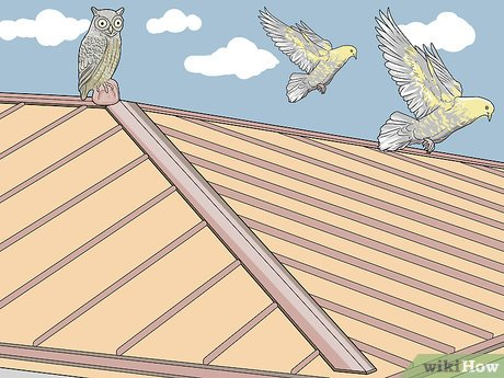 3 Manieres De Empecher Des Oiseaux De Se Poser Sur Un Toit